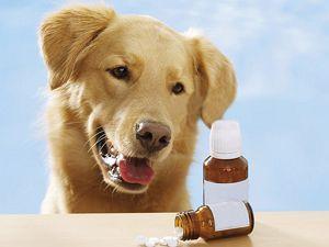 Куда исчезли импортные витамины для собак?