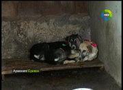В Армении создаются специализированные клиники для бездомных собак