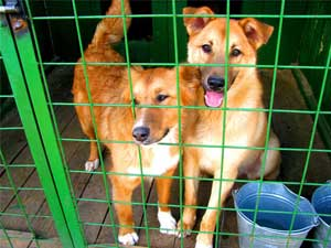 В Улан-Удэ начал работу приют для животных