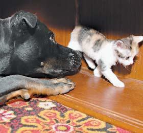 Собака нянчит котят как родных (Нижний Новгород)