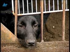 Противостояние собак и людей (Петрозаводск)