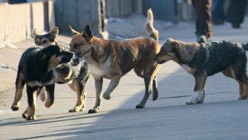Проблему бродячих собак в Москве могут решить не приюты, а добрые руки