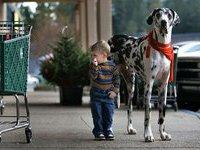 Самая высокая собака в мире живет в США