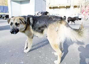 Собака, покусавшая десятки человек на юго-востоке Москвы, отловлена