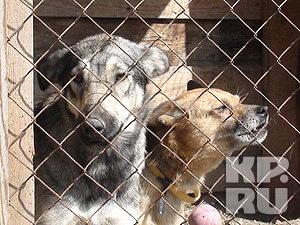 В Новосибирске откроют два новых приюта для бродячих животных