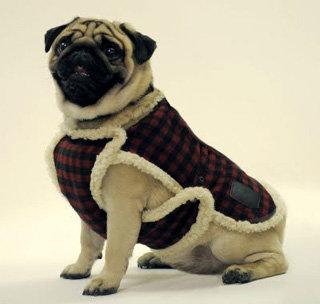 Модный тулупчик для собак (Великобритания)