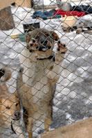 Приюты для бездомных животных в Новосибирске и соседнем Бердске оказались под угрозой закрытия.