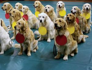 """""""Атомные собаки"""": как делается видеосенсация в Интернете"""