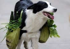 Китаец научил свою собаку ходить за продуктами