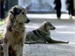 Отсутствие госконтроля за отловом бродячих животных порождает преступную жестокость (Казахстан)