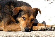 В Красноярске не будет приюта для животных