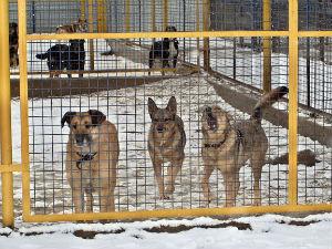 Самарские чиновники через ЖЖ пообещали построить 10 питомников для бродячих собак