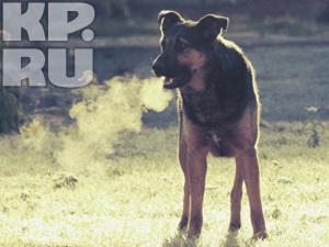 Отстреливать бездомных собак в Челябинске теперь запрещено