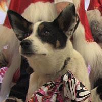 Бездомные собаки стали моделями (Новосибирск)