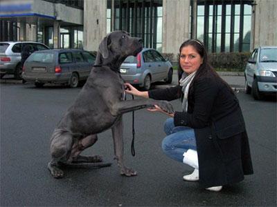 В Днепродзержинске истощенная за два года ожидания собака нашла хозяина