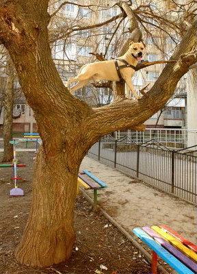 Чудо-собака, которая умеет лазить по деревьям