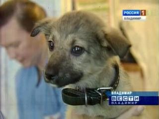 Впервые во Владимире организована выставка бездомных животных