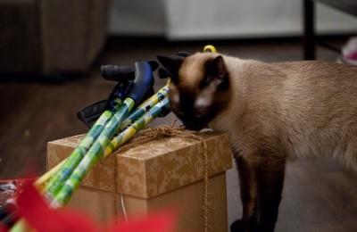 Праздничные атрибуты и традиции крайне опасны для домашних животных