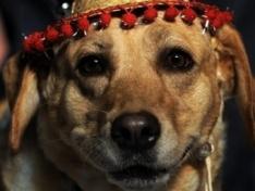 Американец заплатил $10 тысяч за похищенного пса