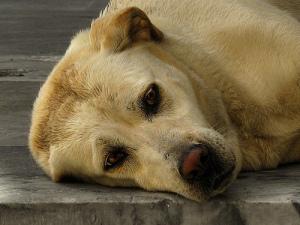 Тысячи собак могли бы позавидовать четвероногому собрату в Иордании, на день рождения которого хозяйка потратила 43 тысячи долларов