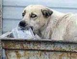 В Москве для бездомных животных построят 11 приютов
