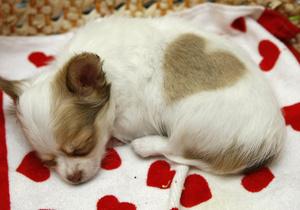 Опрос ко Дню Валентина: 21% людей хотят провести этот день с животными
