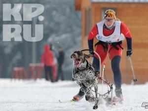 Тверская команда взяла бронзу на Чемпионате Европы по ездовому собаководству