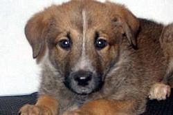 В Екатеринбурге домашних животных бесплатно отдадут в хорошие руки