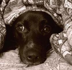 Пес спас от пожара и гибели жителей дома в Архангельске