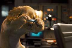 Фильм: «Кошки против собак: Месть Китти Галор» (семейная комедия)