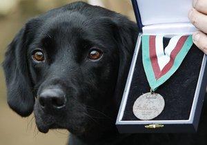 В Британии пес удостоен высшей воинской награды