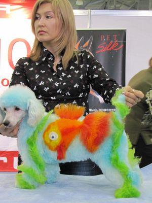 Модные собаки - крашеные и наманикюренные