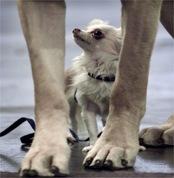 Собачий метр: в Санкт-Петербурге изменились правила содержания домашних животных