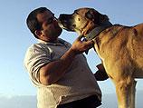 Собачья жизнь: в Израиле 200.000 породистых собак и 185.000 дворняжек