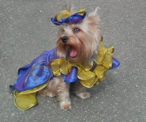 В Ангарске пройдёт костюмированное собачье шоу «Догландия-2010» (Иркутская область)