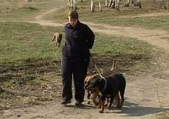Уже в апреле в Харькове появятся специальные места для выгула собак
