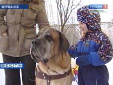 Уже к четвертому занятию ребята знают, как распознать агрессивных собак (Мурманск)