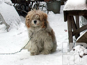 В Красноярске пройдет выставка беспородных собак