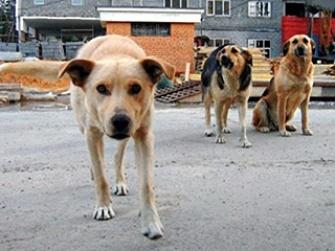В Самаре нет «Синдиката собачьих киллеров»