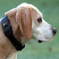 GPS-ошейник для домашних любимцев