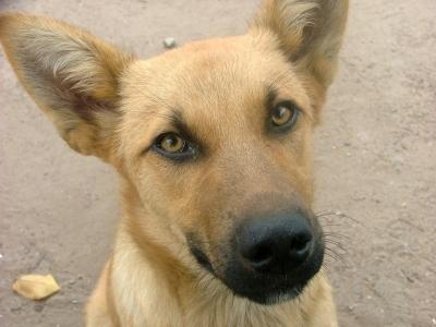 Краснодарский бездомный пес нашел хозяйку в Германии