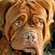 Кузбассовец застраховал собаку на 150 тыс. рублей