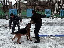 Собаки-охранники - их жизнь подчинена только службе (Воронеж)