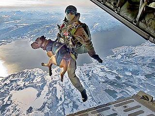 Собаки-парашютисты принимают участие в операциях НАТО в Афганистане