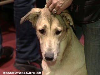 В Красноярске прошла выставка дворняжек