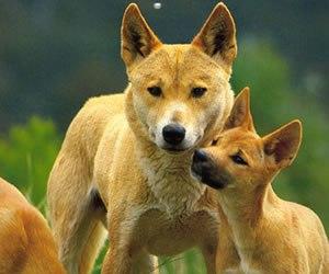 Определены самые древние породы собак