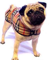 В Екатеринбурге будут раздавать щенков и котят