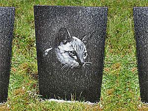 В Петербурге построят первое кладбище для домашних животных