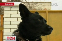 Впервые в Украине человека посадили за издевательство над животным