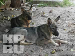 В Казани более 80 дворовых собак обрели хозяев